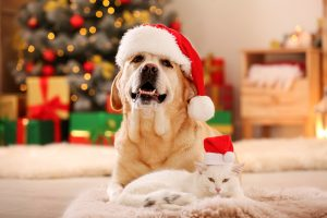 Tips to Pet-Proof Your Florida Home This Holiday Season